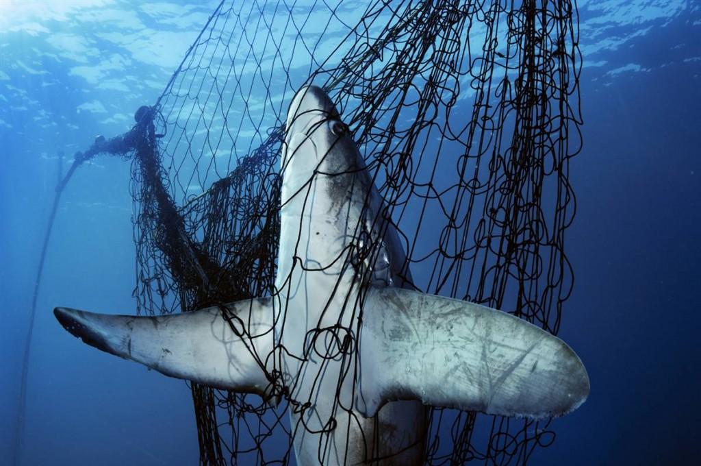 Deep sea bottom trawling
