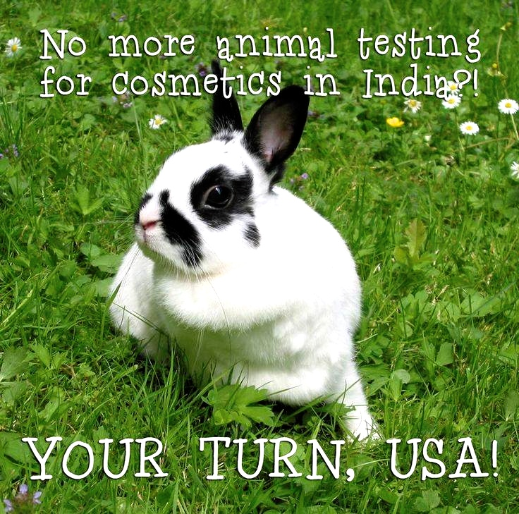 Cosmetic testing on animals essay title?