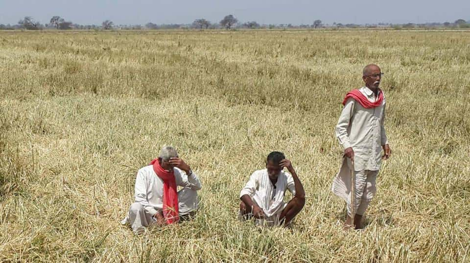 Indian farmers, farmer suicides