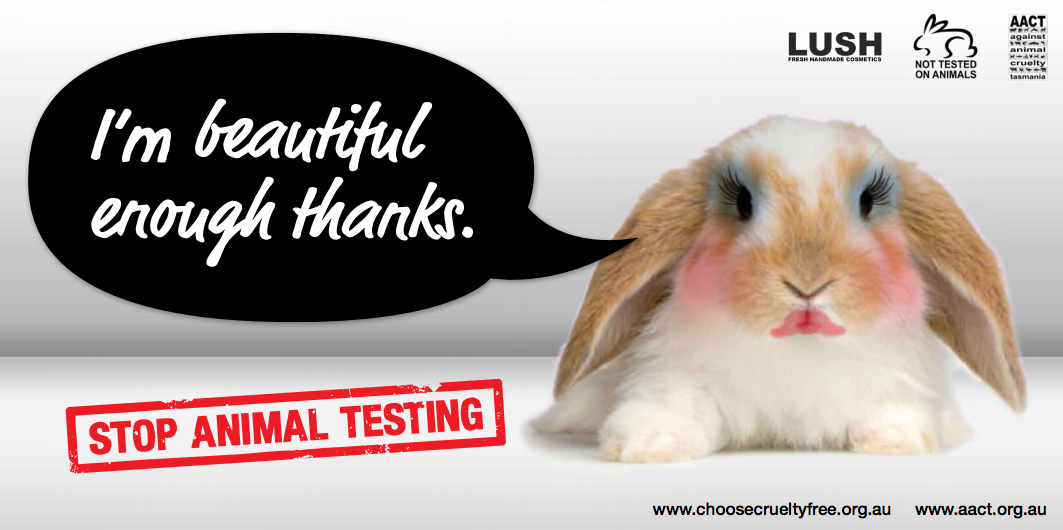 Makeup Testing On Animals Articles