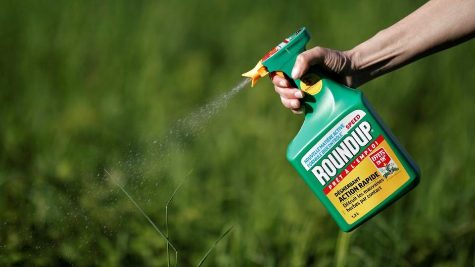 Monsanto has been accused of hiding the dangers of its popular Roundup products for decades, a claim the company denies. Photograph: Benoit Tessier/Reuters