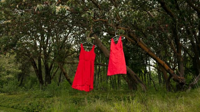 Two red dresses hang in a tree at Swan Creek Park on May 11, 2018, in Tacoma, Wash. The red dresses symbolize missing and murdered Indigenous women. Photo: Jovelle Tamayo for The Intercept