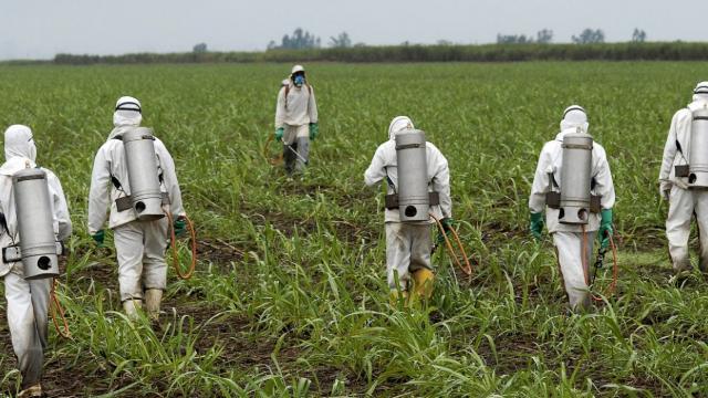 Monsanto, glyphosate, cancer-causing pesticides, GMOs, EPA, Roundup